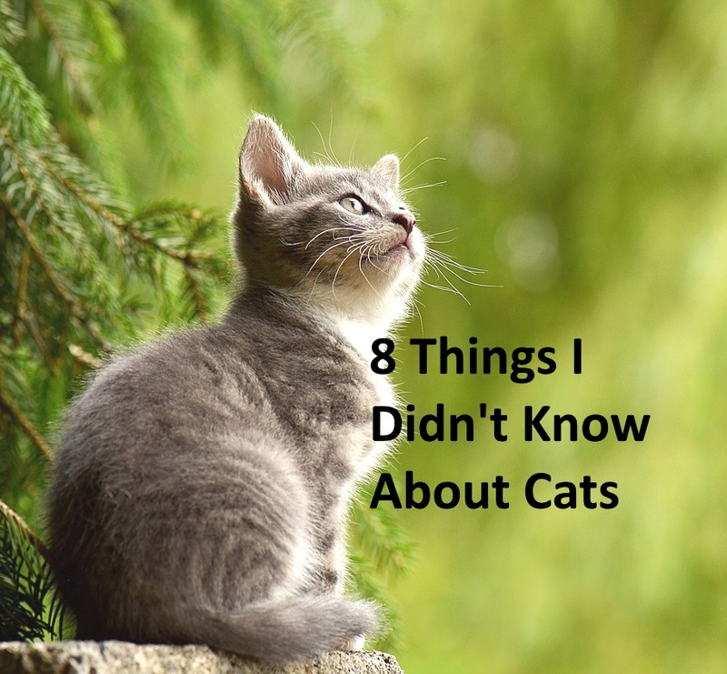 8 Things I Didn't Know About Cats
