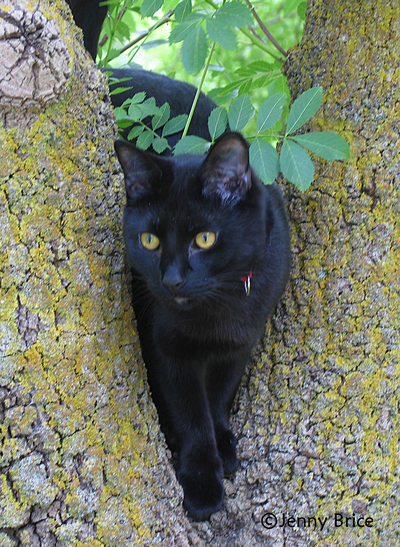 A black cat enjoying a shady tree.