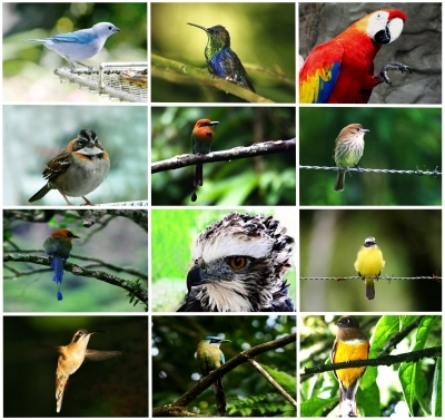 a collage of birds