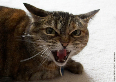 Aggressive Behavior in Cats