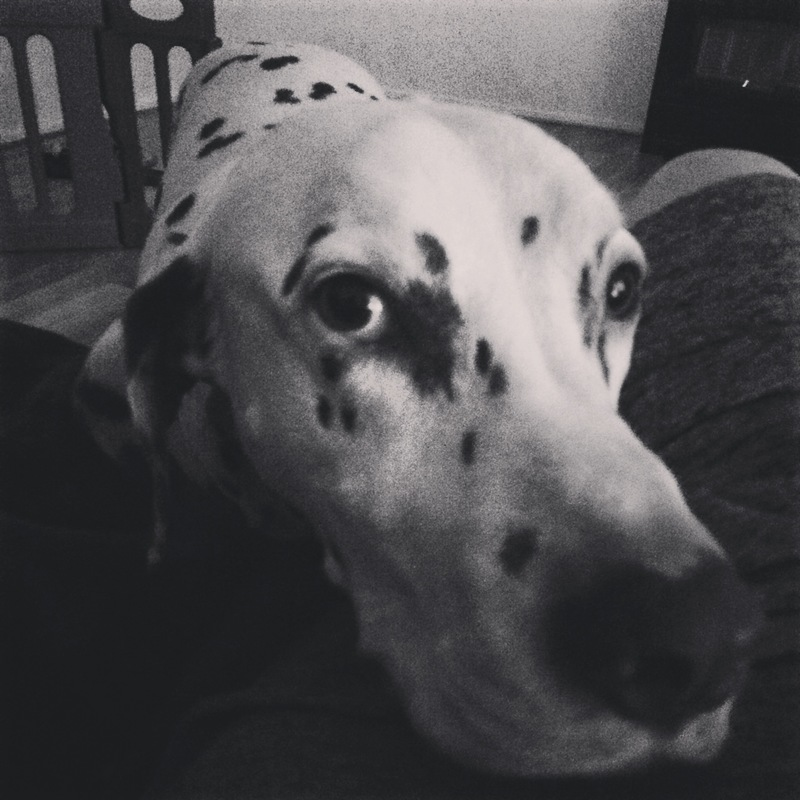 Always by my side  - Anxiety In Dogs