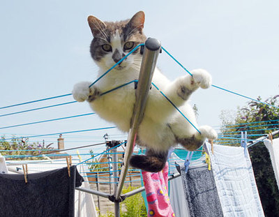 cat clinging to washing line