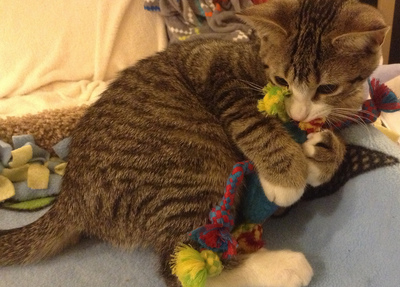 Cat with Chew Toy