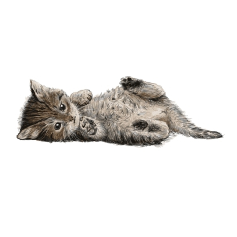 cat lying on side  - What Your Cat's Position Reveals