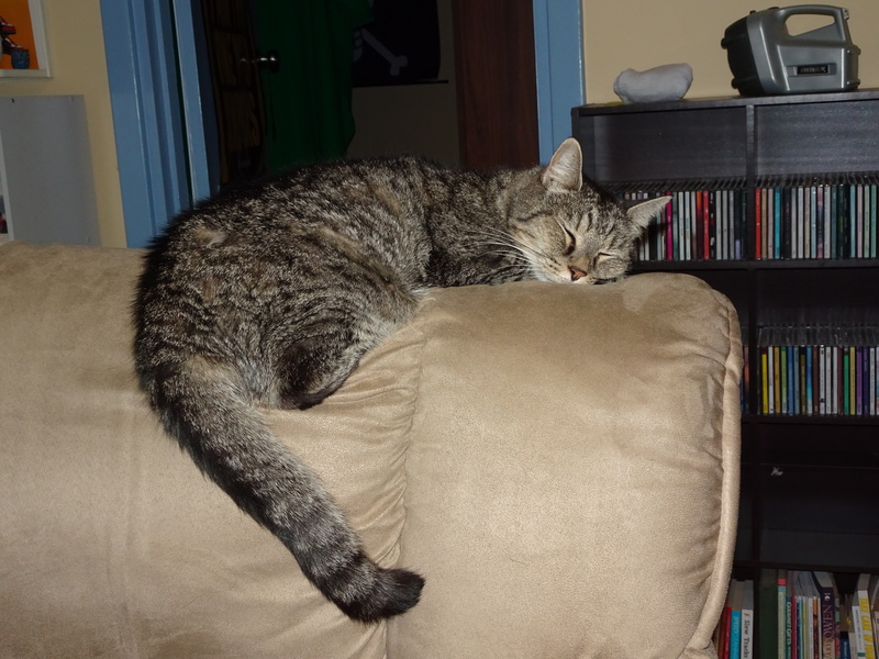 Cat asleep
