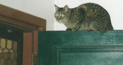 Cat on top of door