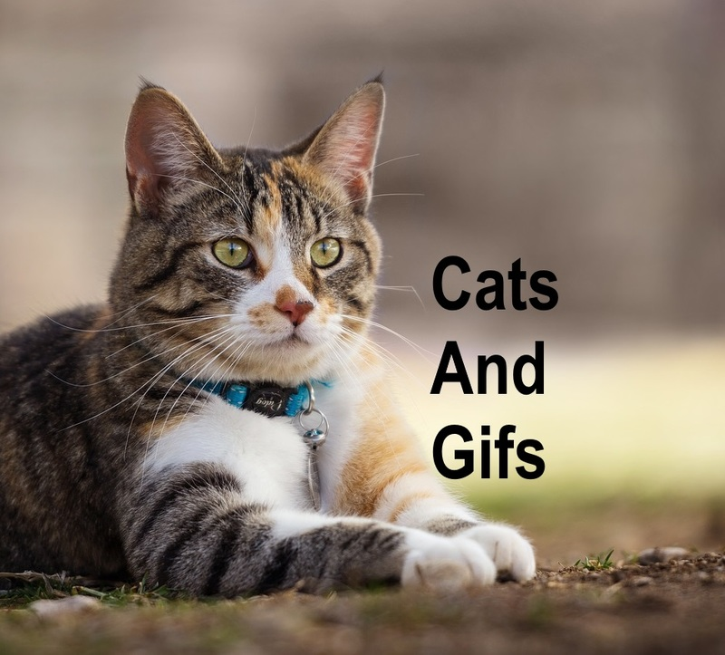 Cats and gifs  - Cats And Gifs