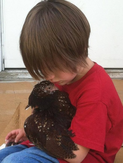 Child Holding a Chicken