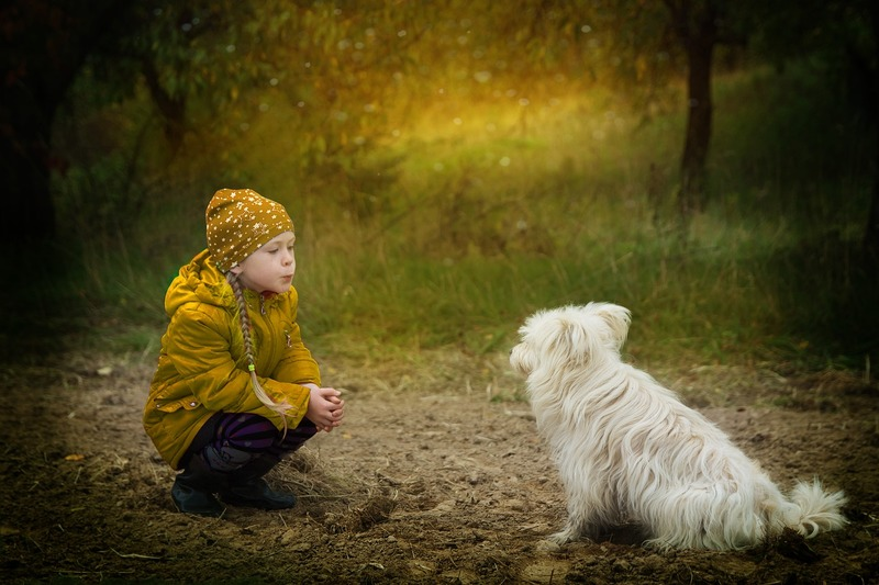 Child and dog  - Considerations when Walking your Dog