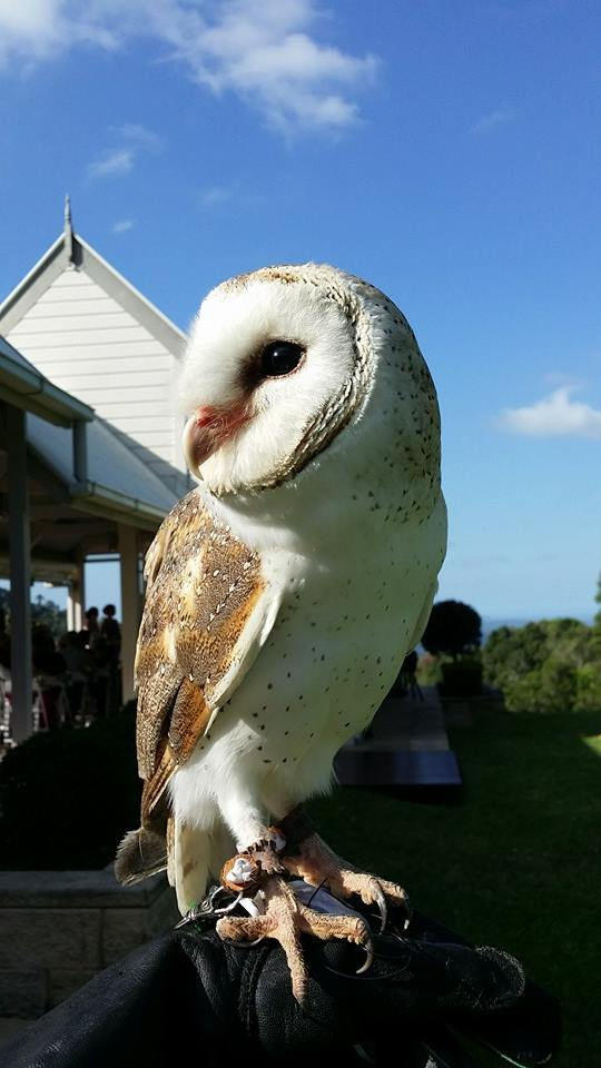 China, the Barn Owl, Raptor Vision
