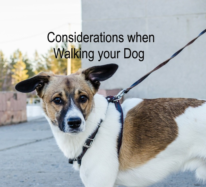 Considerations when walking your dog