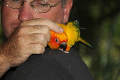 David and Inca the Sun Conure