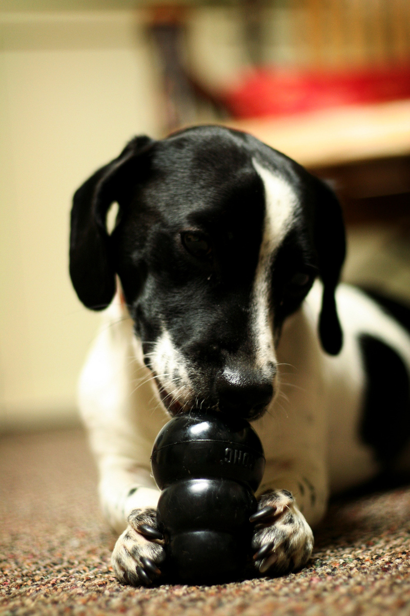 Dog Chewing Kong Toy  - Christmas Gifts for Your Dog