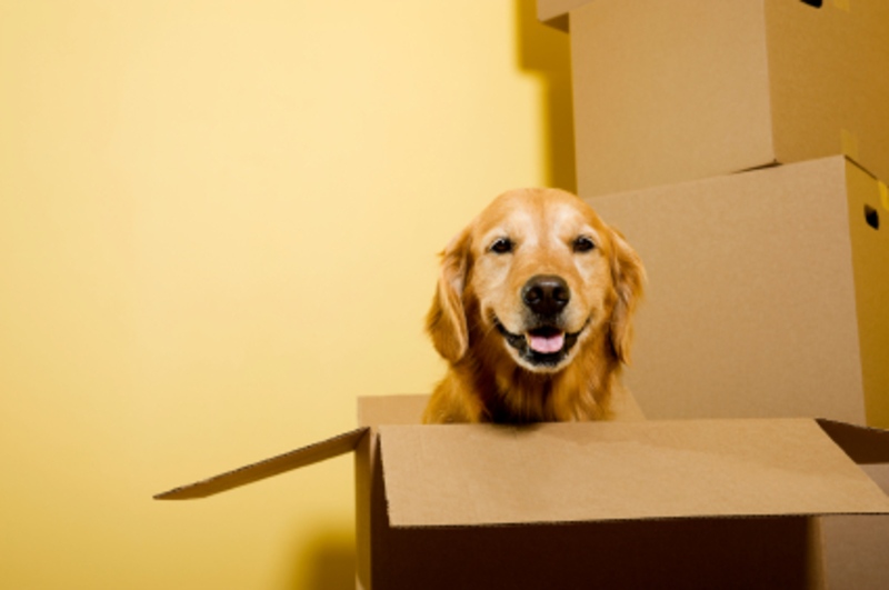 dog-moving-home  - Looking Out For Your Dog When You Move