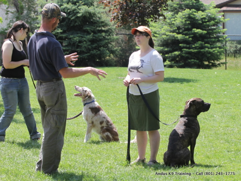Dog Training  - What to Expect From Dog Obedience Training