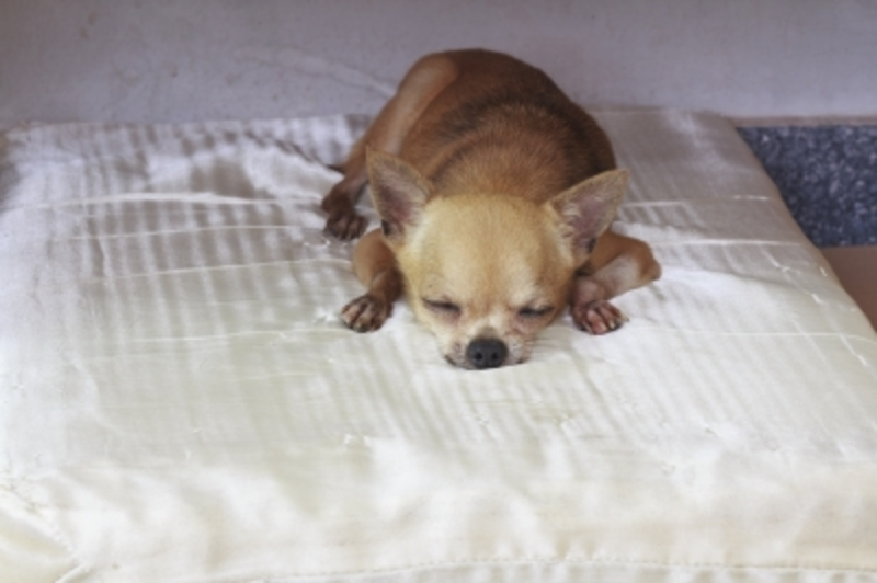Dog Sleeping on Couch  - Five Signs That Your Dog Is Trying To Dominate You