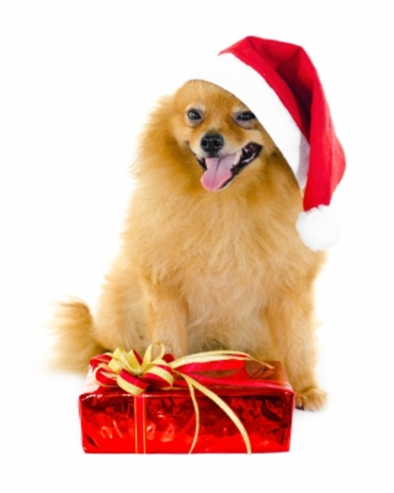 Dog with Christmas Gift
