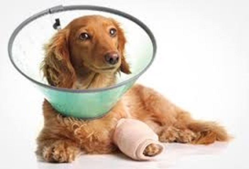 insure,your,pet  - How to Find the Best Pet Insurance