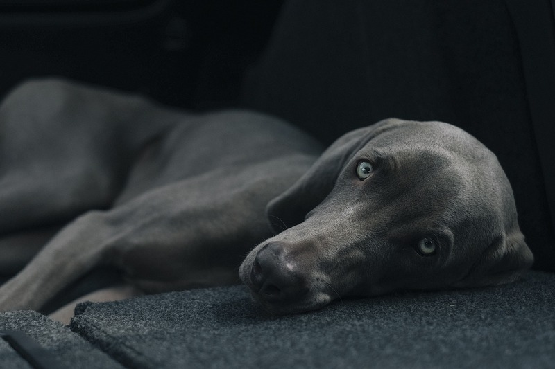 Dog  - The Workplace and Pets