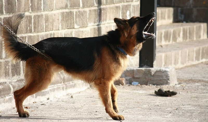 Dog, Chewing, puppy  - You Can Cure Your Dog of Bad Habits