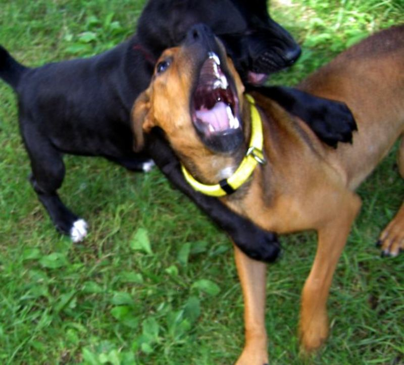 Do you think dogs should be euthanased for attacking another animal?
