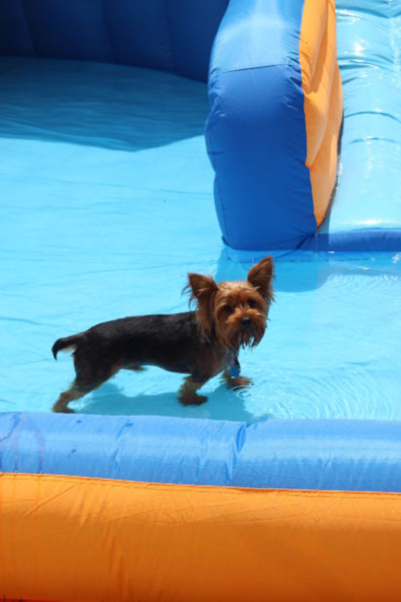 How To Keep Your Pet Safe This Summer
