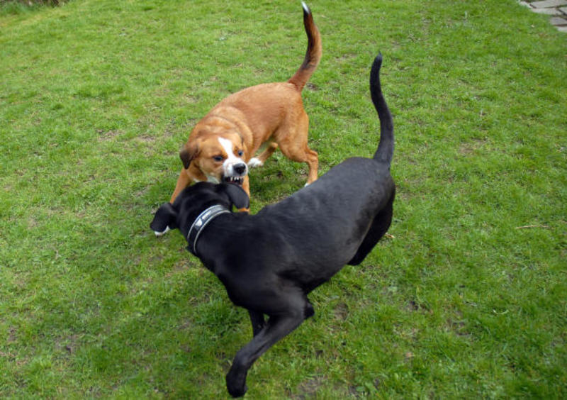 Doggy Talk - Communication Through Tail Wagging
