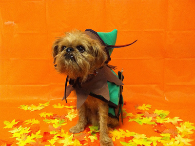 Halloween, Dog Costume, Pet Halloween, Dog Witch, Pet Costume
