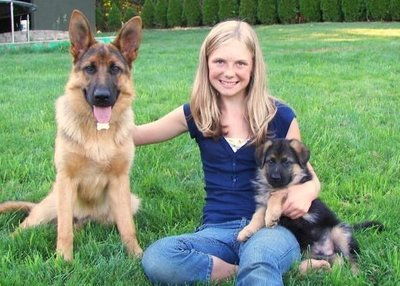 https://www.petsworld.in/blog/10-reasons-why-german-shepherd-is-a-good-family-dog.html