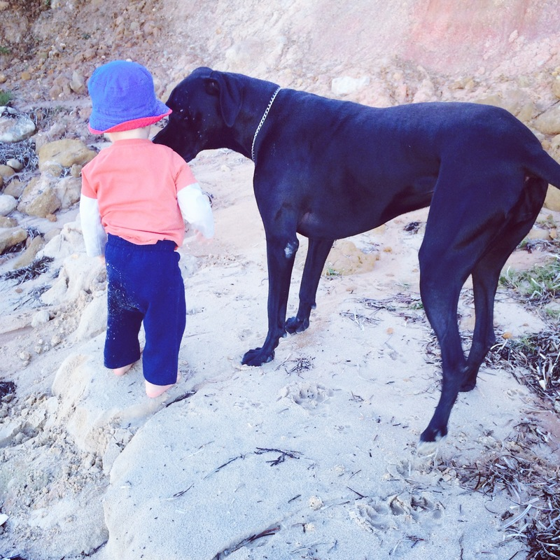 5 things I've learned owning a Great Dane
