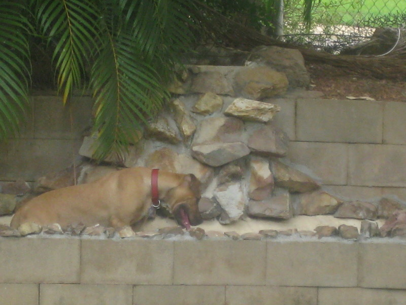 Dog Care In The Tropics- First Aid