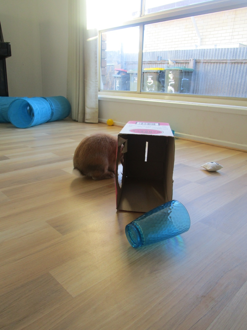 Owning A Bunny: What You Need To Know.
