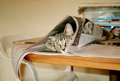 Kitten peering out from under newspaper