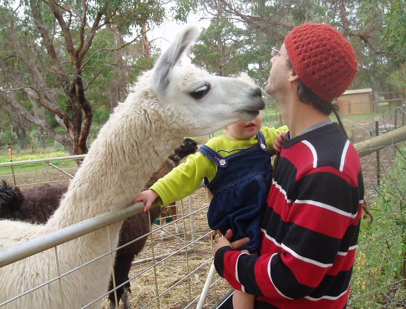 llama kiss