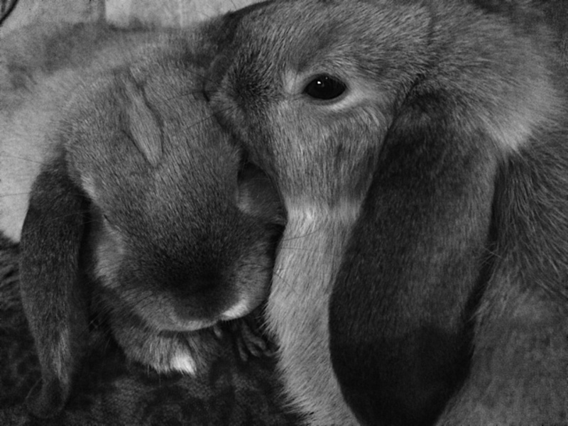 My two bunnies Valentine and Winter  - How to keep a bored bunny, busy.