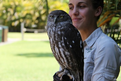 Neubi, the Barking Owl - Australia Zoo 2014