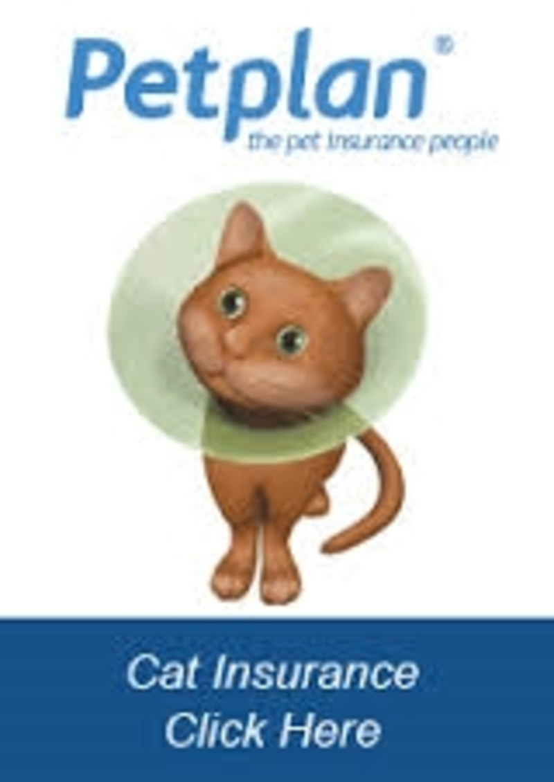 pet  - How to Find the Best Pet Insurance