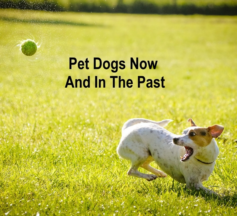 Pet dogs now and in the past
