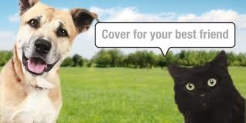 pet,insurance  - How to Find the Best Pet Insurance