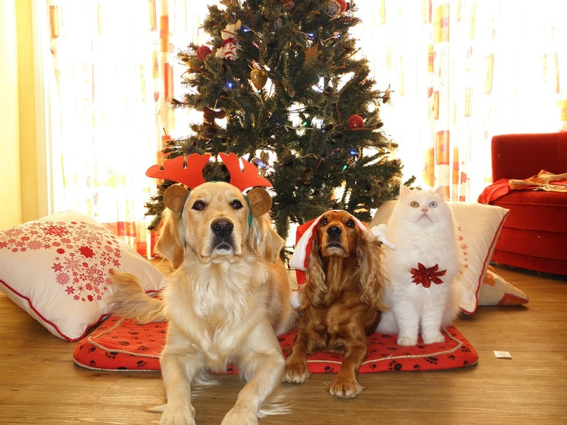 Pets under Christmas tree