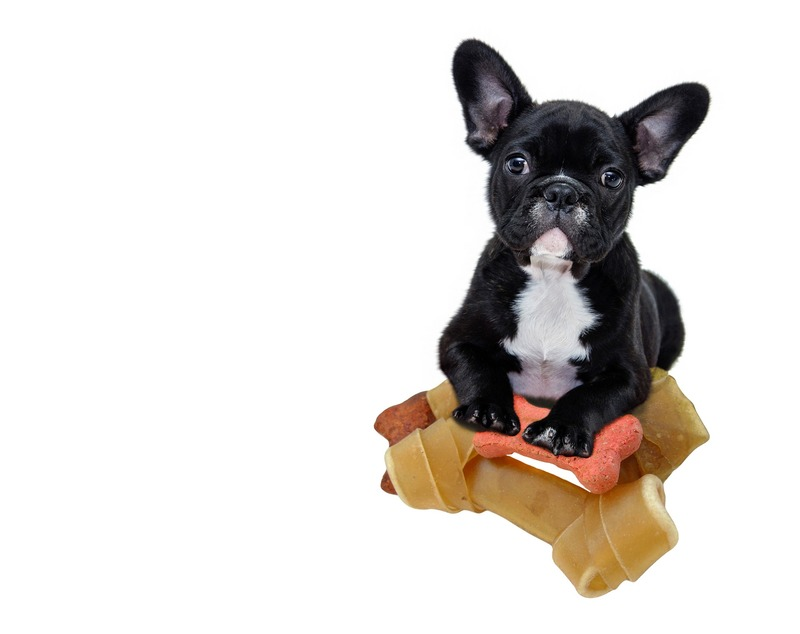 Puppy Food  - Best Puppy Food Brands for your Lovely Puppy