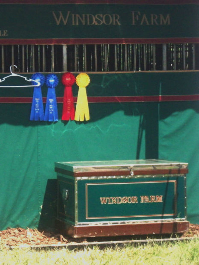 ribbons, best in show, best of breed  - Do you ever put your pets in shows?