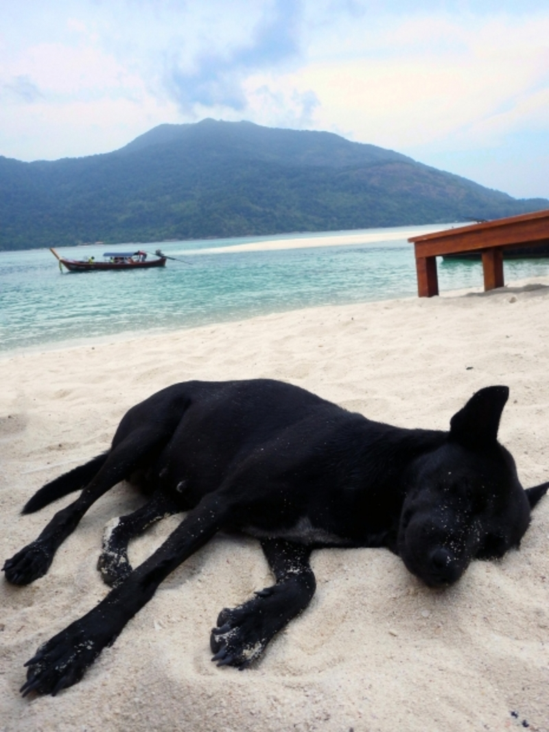 Saltwater Toxicity in Pets