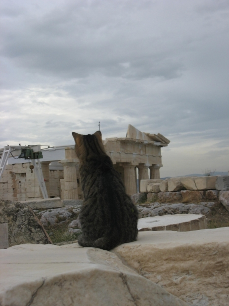Top Tips for Travelling With Your Cat