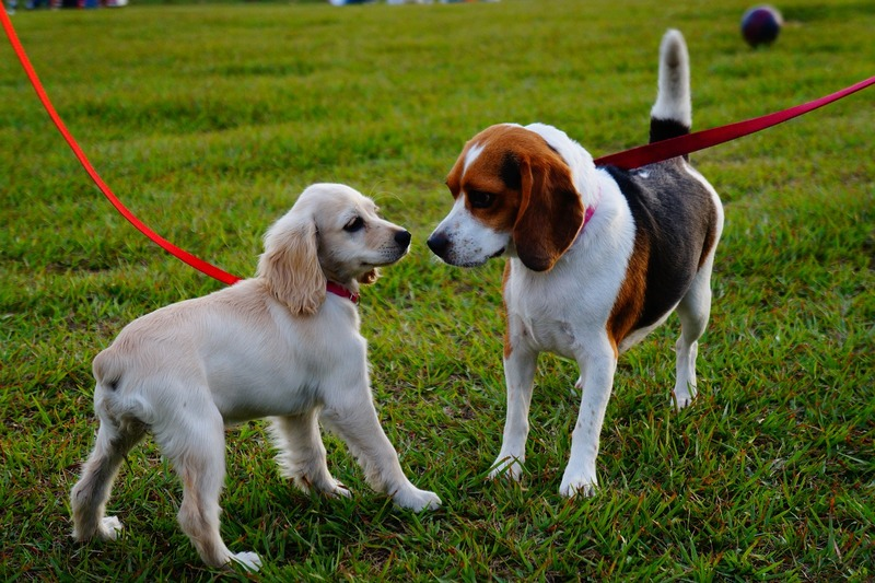 Walking a dog  - Responsible Dog Ownership And The Law