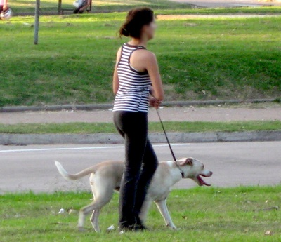 Woman Walking Dogs