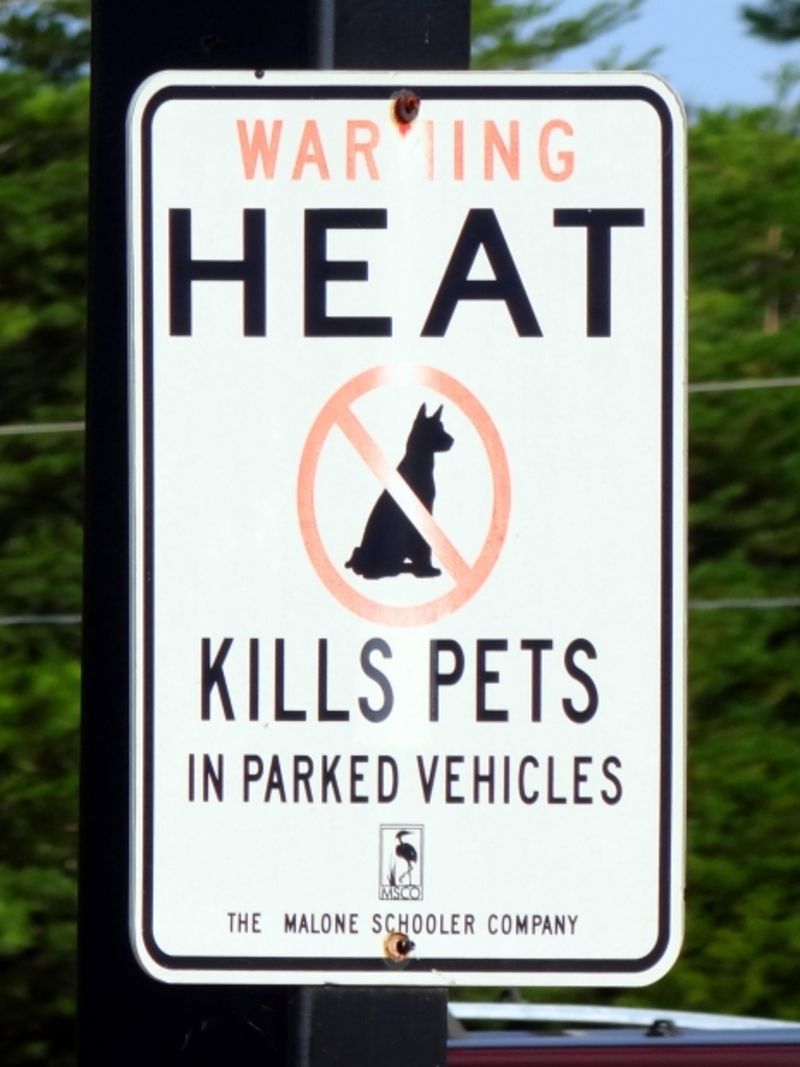 Would you confront an owner if you noticed they had left their pet in a car on a hot day?